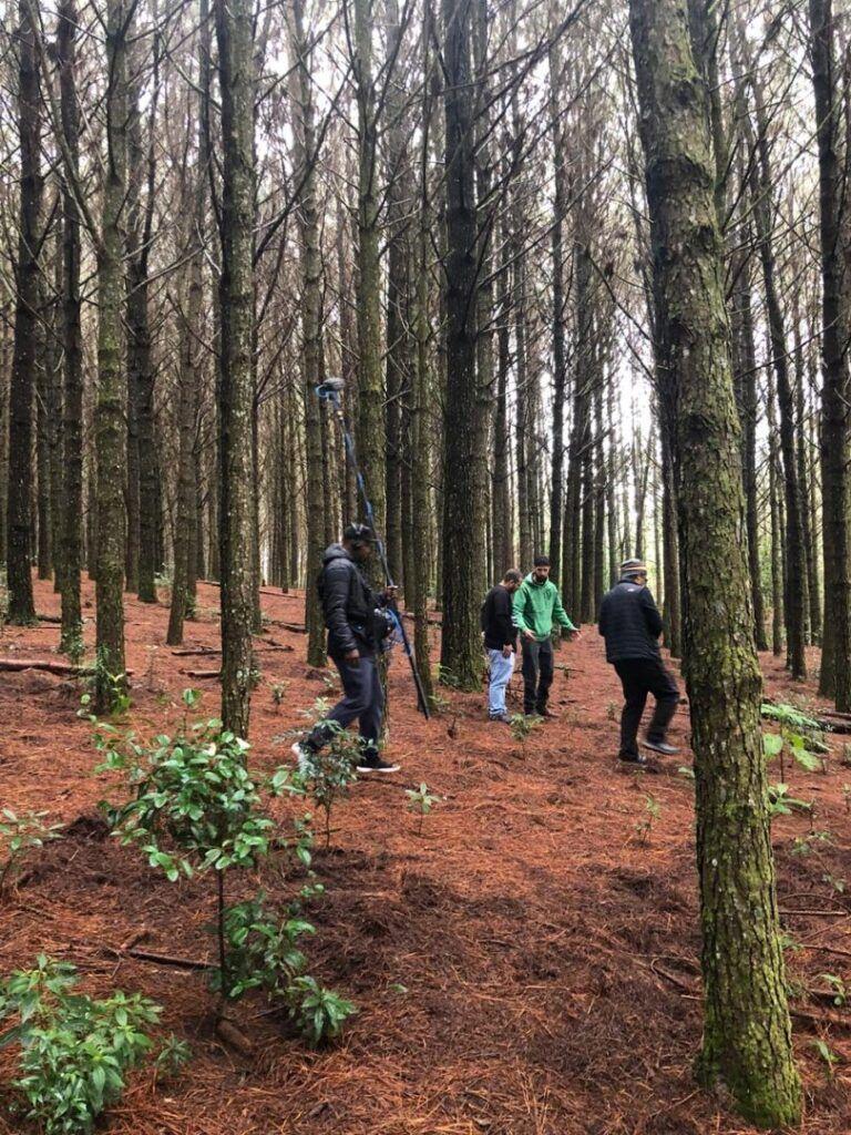 Expedição Fartura   A caça ao cogumelo em Joinville