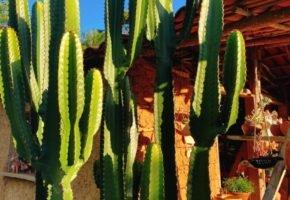 As cores da Paraíba: onde o sertão é colorido e vibrante