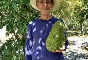 Frutas de Quintal: conheça o projeto de economia colaborativa